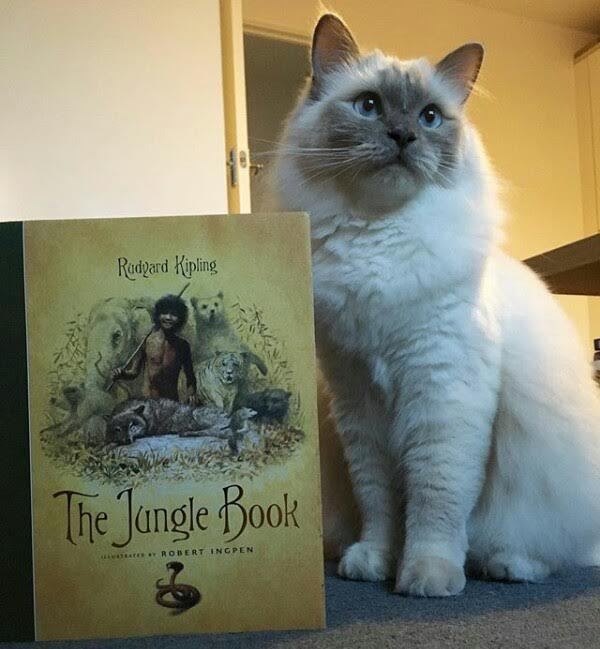 The Jungle by Book Rudyard Kipling - Book Review